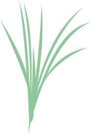 óleos essenciais biológicos de erva-príncipe